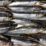 Sicilian anchovies